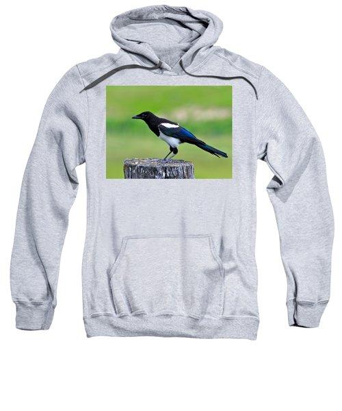 Black Billed Magpie Sweatshirt by Karon Melillo DeVega