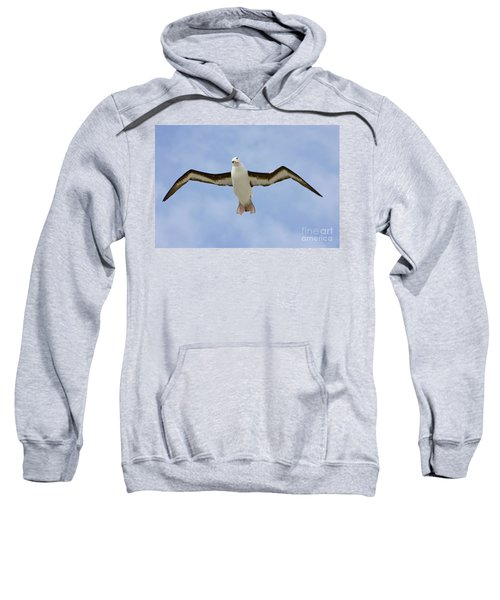 Black-browed Albatross Flying Sweatshirt by Yva Momatiuk John Eastcott