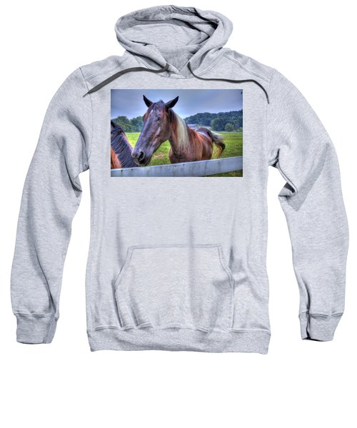 Black Horse At A Fence Sweatshirt
