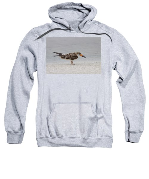 Black Skimmer Sweatshirt