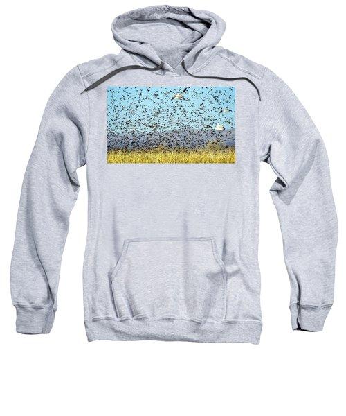 Blackbirds And Geese Sweatshirt