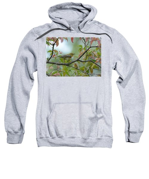Blackpoll Warbler In The Fall Sweatshirt