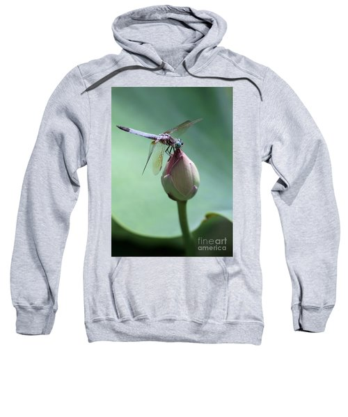 Blue Dragonflies Love Lotus Buds Sweatshirt