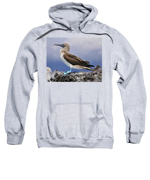 Blue-footed Booby Sweatshirt by Tony Beck