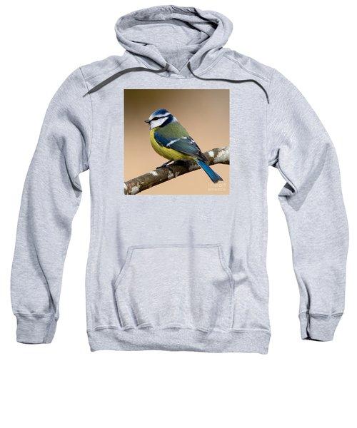 Blue Hood  Sweatshirt
