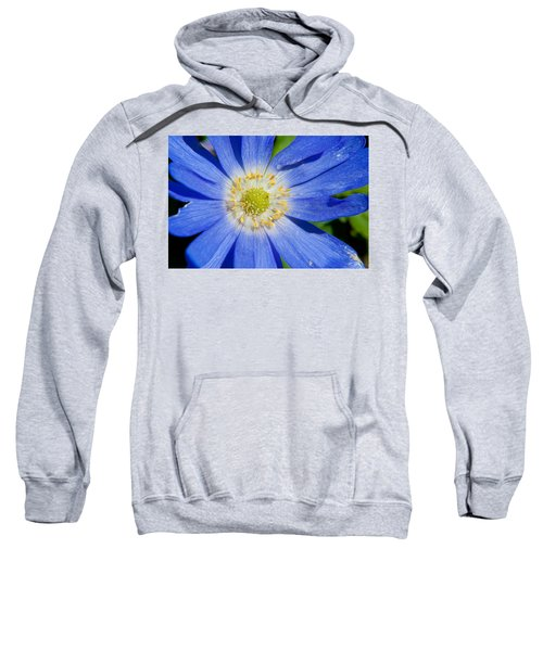 Blue Swan River Daisy Sweatshirt