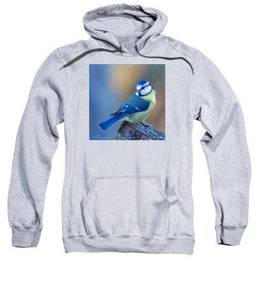 Blue Tit Looking Behind Sweatshirt