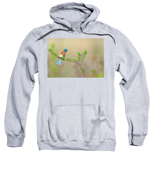 Bluebird Breeze Sweatshirt