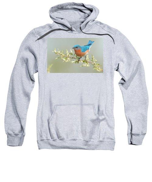 Bluebird Floral Sweatshirt