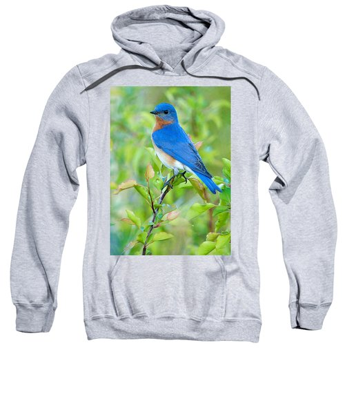 Bluebird Joy Sweatshirt