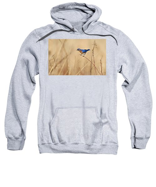Bluebird Meadow Sweatshirt