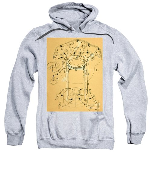 Brain Vestibular Sensor Connections By Cajal 1899 Sweatshirt