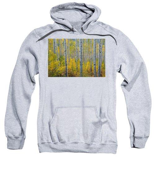 Brilliant Colors Of The Autumn Aspen Forest Sweatshirt
