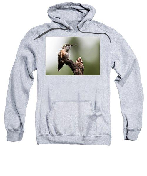Broad-tailed Hummingbird Sit  Sweatshirt