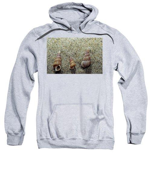 Brown-banded Wentletrap Sweatshirt
