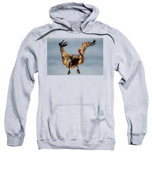 Brown Pelican Pelecanus Occidentalis Sweatshirt