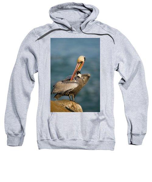 Brown Pelican Preening Sweatshirt