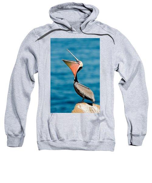 Brown Pelican Showing Pouch Sweatshirt