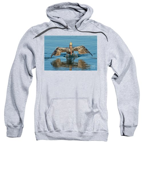 Brown Pelican Taking Off Sweatshirt