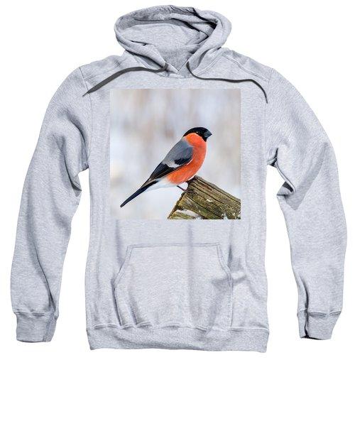 Bullfinch On The Edge Sweatshirt