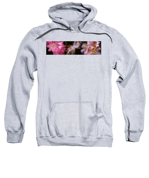 Butterfly Nebula With Iris And Pink Sweatshirt