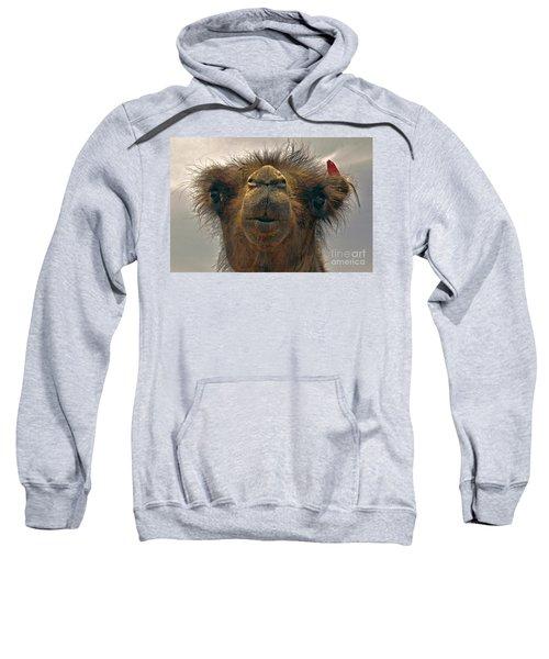 Camel In The Gobi- Mongolia Sweatshirt