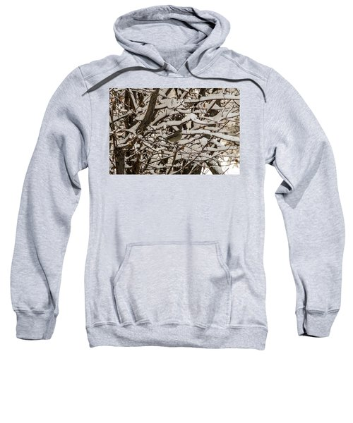 Camouflaged Thrush Sweatshirt