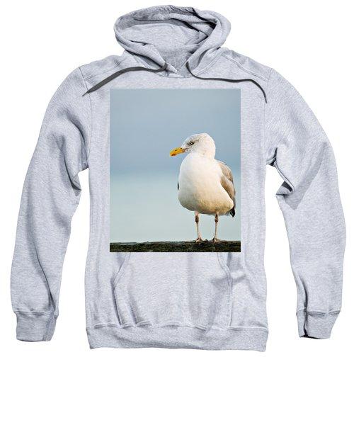Cape Cod Seagull Sweatshirt