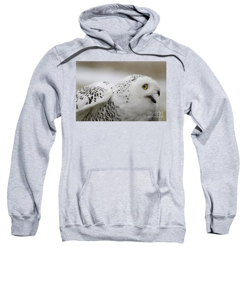 Cheeky Snow Owl Sweatshirt