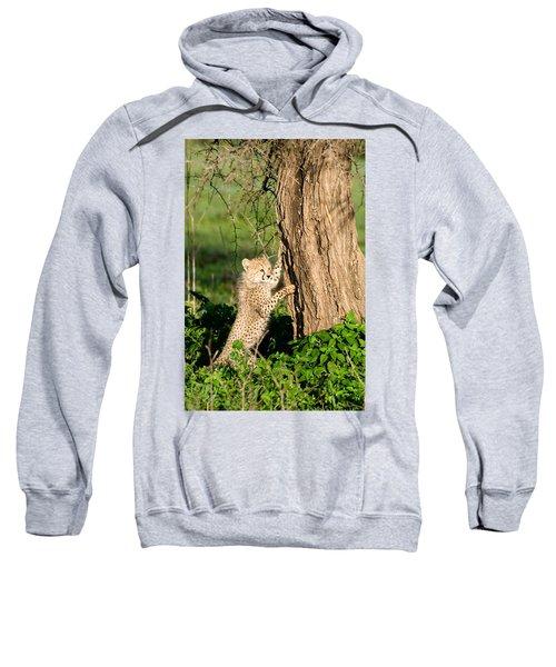 Cheetah Cub Acinonyx Jubatus Climbing Sweatshirt