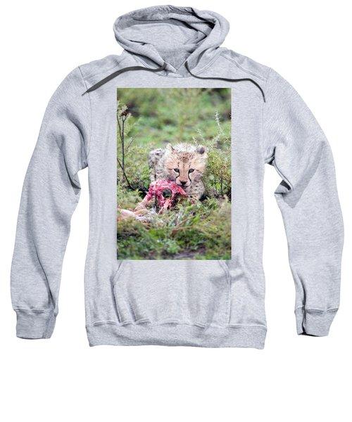 Cheetah Cub Acinonyx Jubatus Eating Sweatshirt