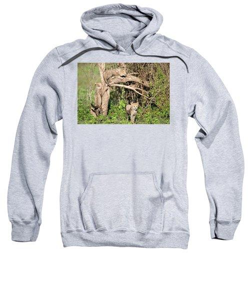 Cheetah Cubs Acinonyx Jubatus Climbing Sweatshirt