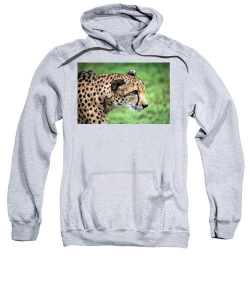 Cheetah Profile Color Sweatshirt
