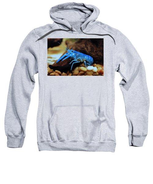 Cherax Quadricarinatus Sweatshirt