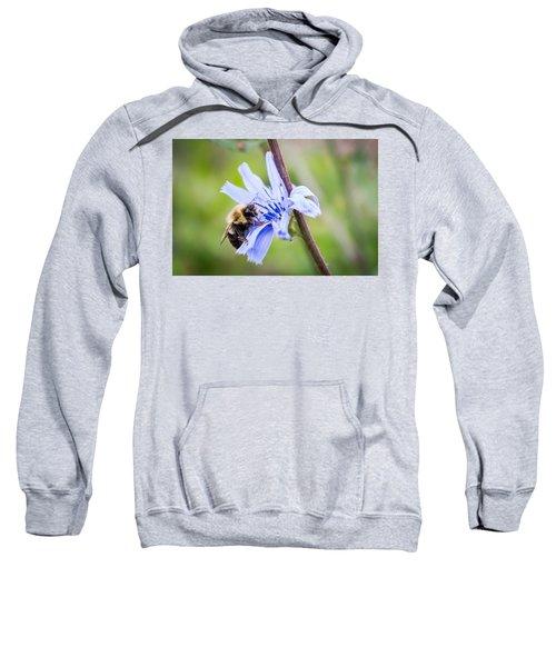 Chicory Bee Sweatshirt