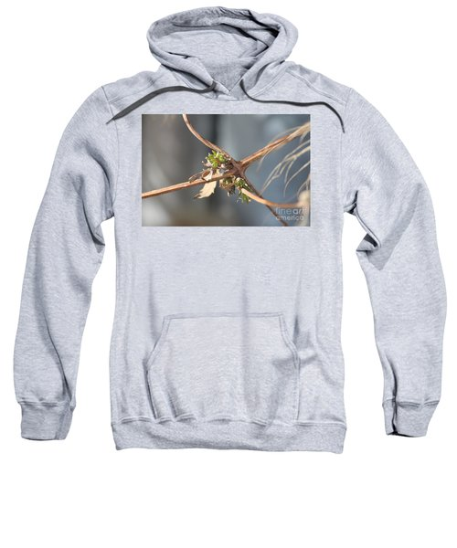 Clematis Vine Sweatshirt