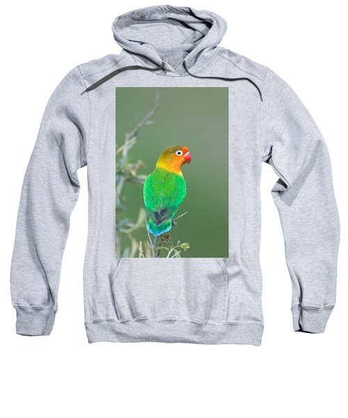 Close-up Of A Fischers Lovebird Sweatshirt by Panoramic Images