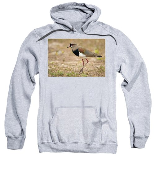 Close-up Of A Southern Lapwing Vanellus Sweatshirt