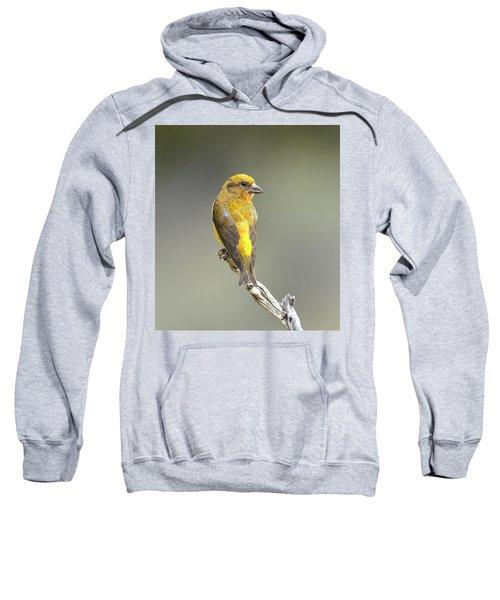 Common Crossbill Loxia Curvirostra Sweatshirt