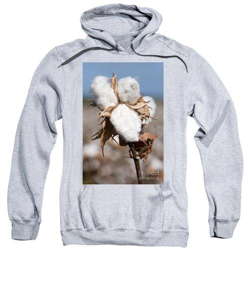 Cotton Bolls  Sweatshirt