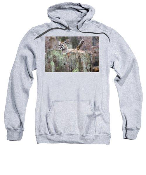 Cougar On A Stump Sweatshirt