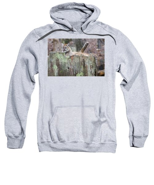 Cougar On A Stump Sweatshirt