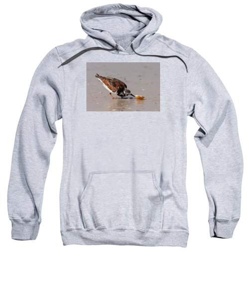 Curious Turnstone Sweatshirt