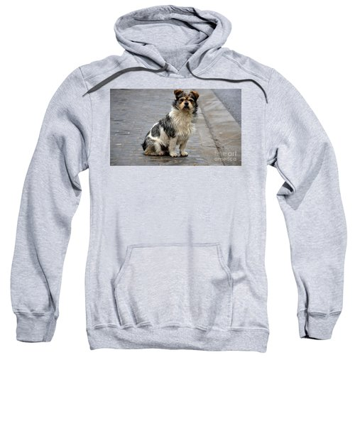 Cute Dog Sits On Pavement And Stares At Camera Sweatshirt