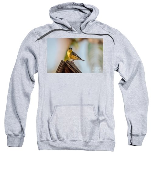 Cute Finch Sweatshirt
