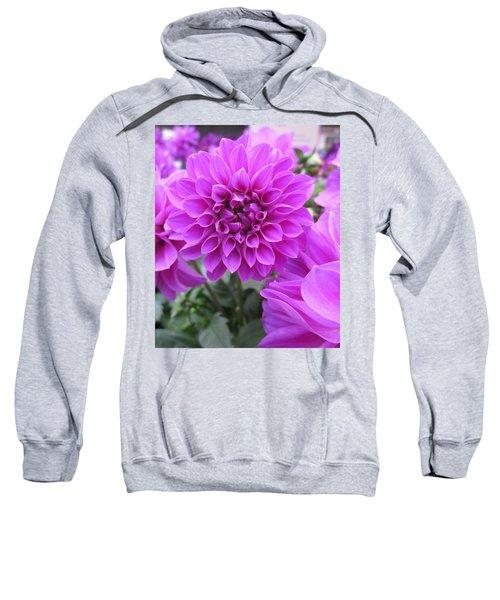 Dahlia In Pink Sweatshirt