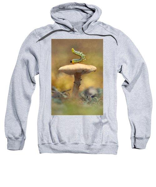 Daily Excercice Sweatshirt