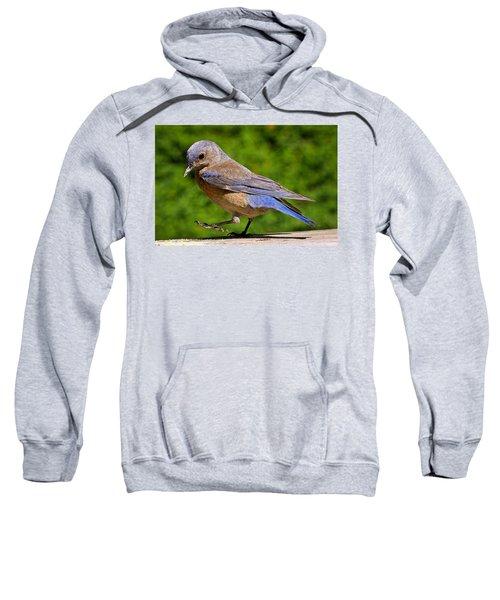 Dancing Western Bluebird  Sweatshirt