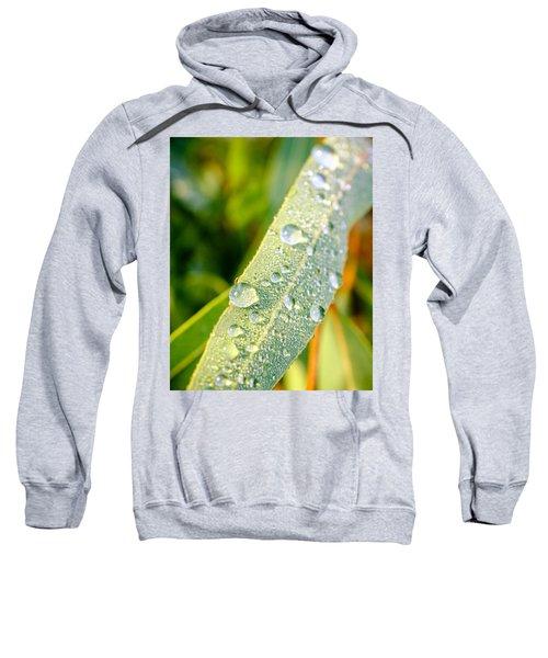 Dawn Dew Sweatshirt