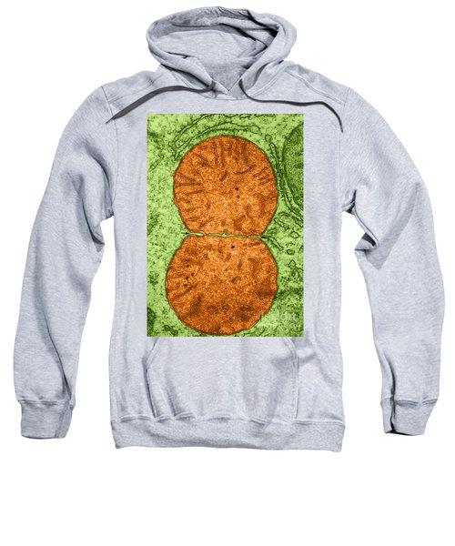 Dividing Mitochondrion Tem Sweatshirt
